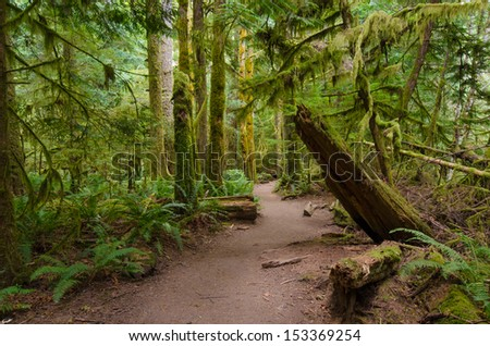 Moss covered rainforest trail in Olympic National Park - stock photo