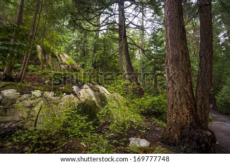 Moss covered rock sits below beautiful green old growth forest. - stock photo