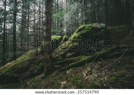 moss covered rocks in pine tree forest wild scenery - stock photo