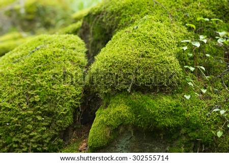Moss covered stones in the forest. - stock photo