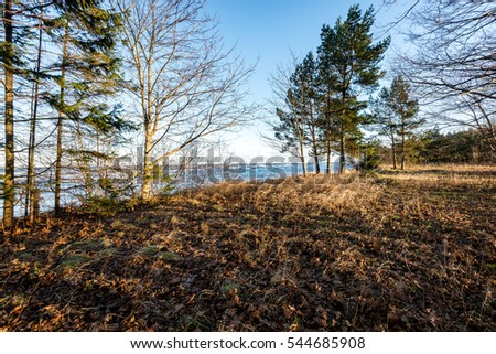 moss covered  tree trunks in rows on the sea beach with low winter sun