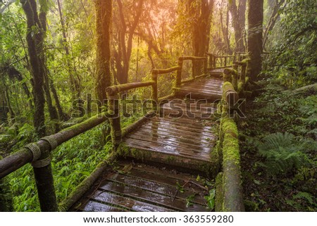 Moss forest, passage in the primeval forest in Doi inthanon Chiang Mai, Thailand on sunlight.  - stock photo