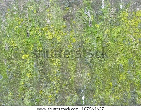 Moss growing on ancient cathedral wall