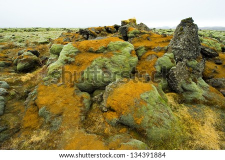 Moss growing on volcanic rocks in Iceland in the winter - stock photo