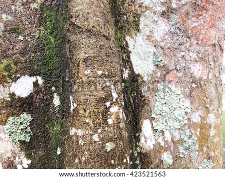 Moss grows heavily on the bark of this tree and creates an appealing texture.