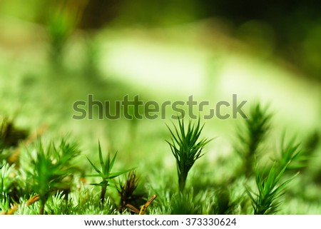 Moss in the wood - stock photo