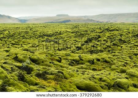 Moss Lava Rock in Iceland (Volcanoes rock) - stock photo