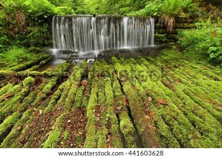 Moss logs and cascade - stock photo