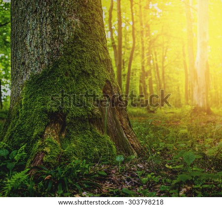 moss on a tree in the forest - stock photo