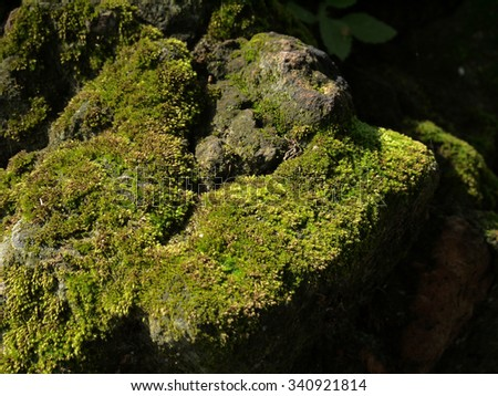 moss on brick closeup