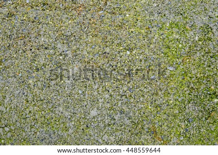 moss on cement block texture - stock photo
