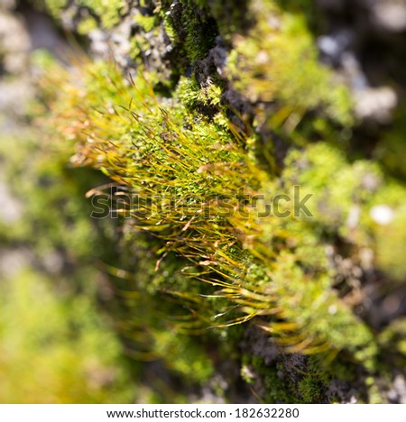 moss on concrete. macro