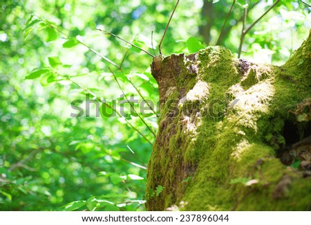 moss on forest, closeup - stock photo
