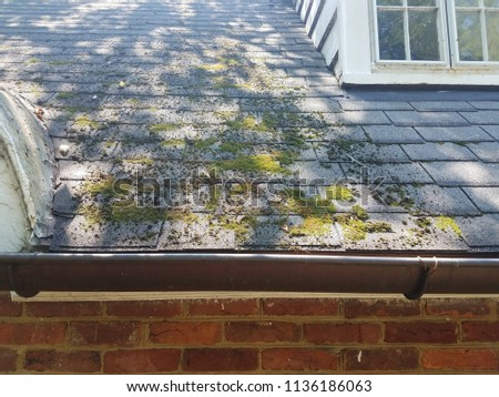 moss on roof shingles