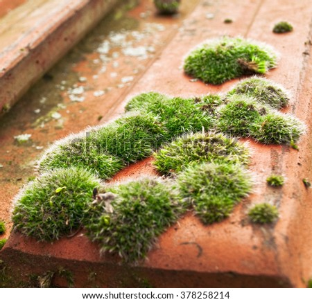 Moss on roof tiles - stock photo
