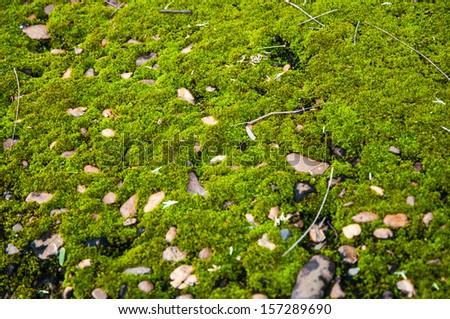 Moss on stone - stock photo