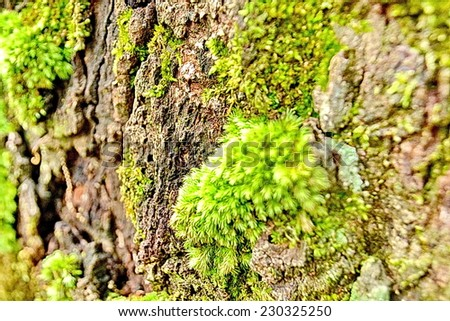Moss on stone,Piece of green moss on an old abandoned farm. - stock photo