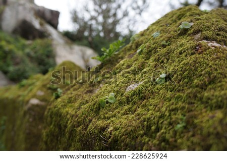 Moss on the castle wall - stock photo