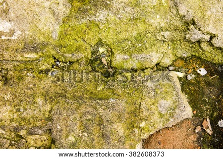 Moss on the cracked sidewalk texture background