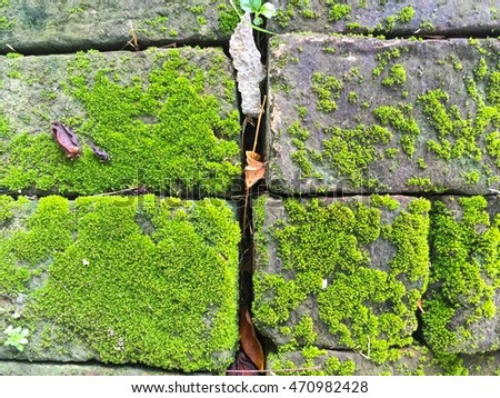 Moss on the ground