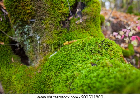 Moss on the tree. Nature backgrounds