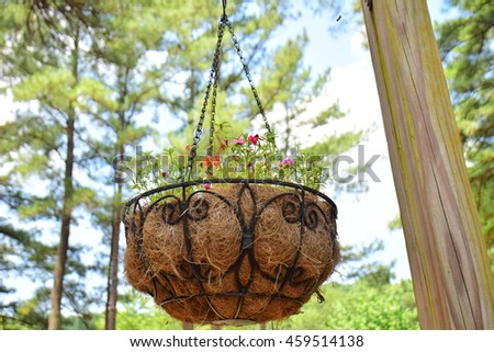 Moss Rose Portulaca grandiflora in pots to hang on - stock photo