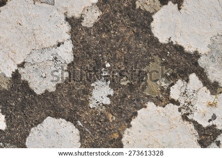 moss stone macro - stock photo
