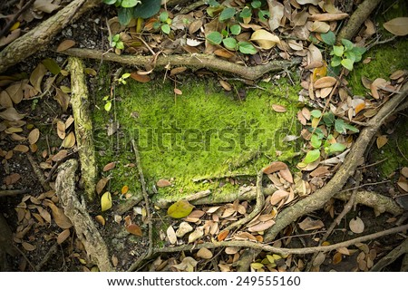 Moss Texture Background - stock photo