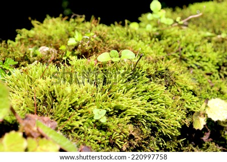Moss waterfall on the stone - stock photo