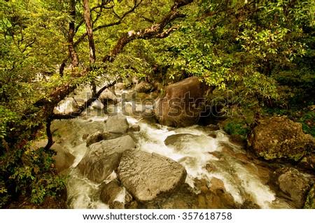 Mossman Gorge, Daintree National Park, Queensland, Australia - stock photo