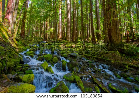Mossy creek - stock photo