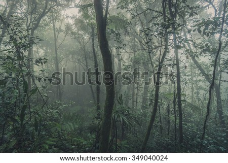 Mossy Forest, Foggy misty forest view, Cameron Highlands, Malaysia - stock photo