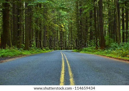 Mossy Forest Road - Washington State Olympic Peninsula. Olympic National Park. Washington State Photo Collection. - stock photo