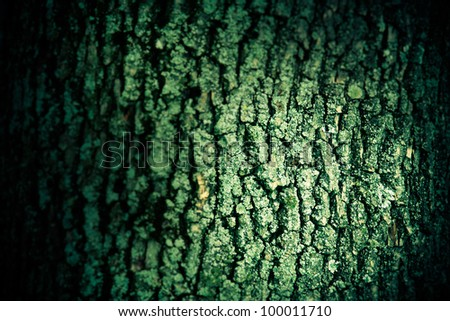 mossy old tree bark texture