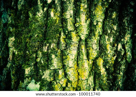 mossy old tree bark texture - stock photo