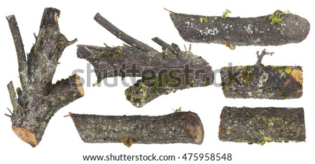 Mossy stubs as material for awful installations for Halloween. Isolated wooden set