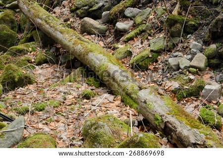 Mossy stump - stock photo