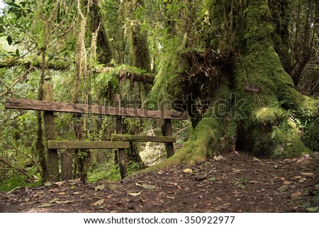 Mossy Tree and Fence at Doi Inthanon National Park