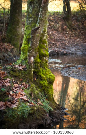 Mossy tree in the forest - stock photo