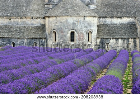 Most beautiful lavender field in Provence. An ancient monastery Abbaye Notre-Dame de Senanque ( Abbey of Senanque).  Vaucluse, France