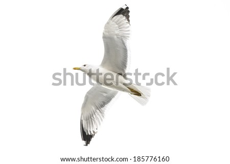 Most famous among seabirds, gulls belong to the family of the same name in the squad Charadriiformes. There are about 60 species of birds. - stock photo