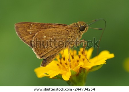 moth and flower - stock photo