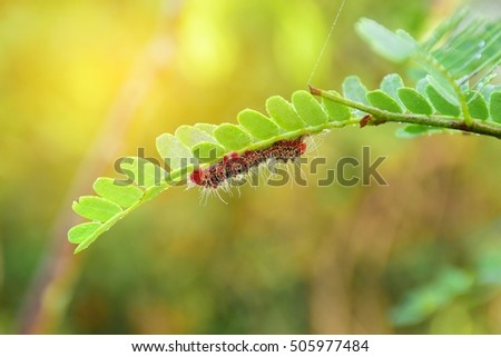 Moth Caterpillar on tree branch in tropical forest and beautiful nature.