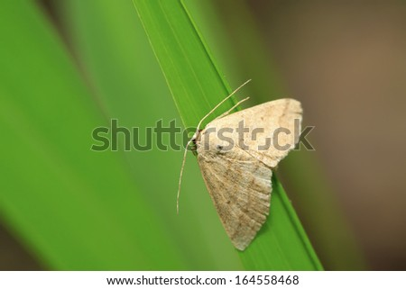 moth insects on green leaf in the wild - stock photo