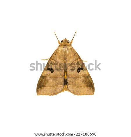 moth. night butterfly on white background - stock photo