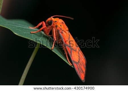 Moth of Borneo , Moth - stock photo
