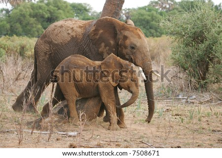 Mother African Elephant and Baby