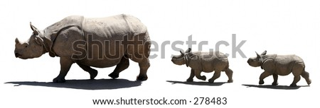 Mother and babies rhino