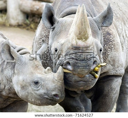 Mother and Baby Black Rhino - stock photo