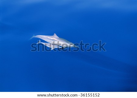 Mother and baby dolphins - stock photo
